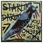 STARLING DARLING - Frank Willems