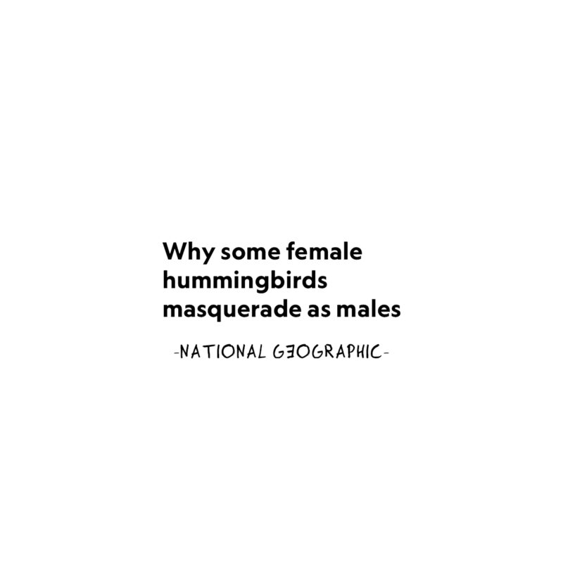 COCKY HUMMINGBIRD 04 - National Geographic - Frank Willems